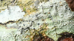Shot of the ant on the tree Stock Footage