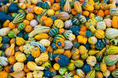 Stock Photo of bunch of small pumpkins