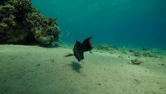 Underwater fish  reef corals red sea Stock Footage