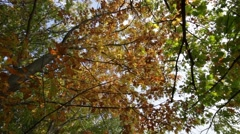 Autumn forest  bottom shot Stock Footage