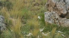 Bones on ground ritual sacrafice creepy Stock Footage