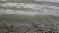 Stock Video Footage of water waves algae pan