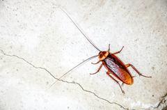 Close up cockroach Stock Photos
