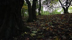 Mystical forest in autumn with falling leaves Stock Footage