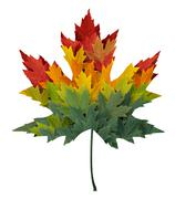 seasonal maple leaf - stock illustration