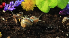 Garden Snails 1 - stock footage
