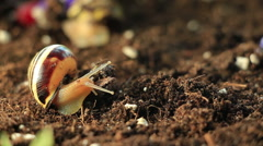 Garden Snails 5 - stock footage