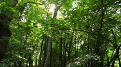 Forrest steadyshot Stock Footage