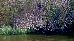 Tree leaned over the water Stock Footage