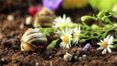 Garden Snails 12 Stock Footage