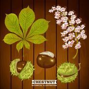 Chestnut Autumn Botanical Vector Illustration Stock Illustration