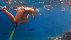 Many sergeant fish Stock Footage