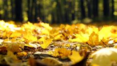 Yellow autumn leaves in the park. Stock Footage