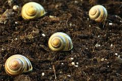 Snails in the Garden 1 - stock photo