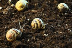 Snails in the Garden 2 - stock photo