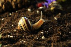 Snails in the Garden 5 - stock photo
