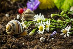 Snails in the Garden 6 - stock photo