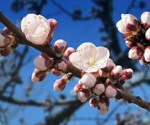spring blossom - stock illustration