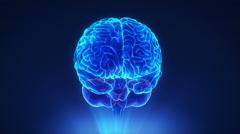 right cerebellum in loop brain concept - stock footage