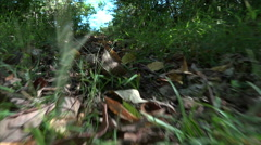 Point of View of a Small Animal Running Stock Footage