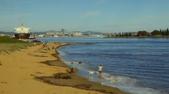 On the shore Stock Footage