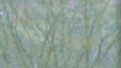 Countryside Rain Stock Footage