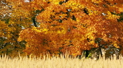 autumn forest and field at sunset - stock footage