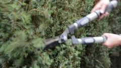 cutting hedge with hedge clippers - stock footage