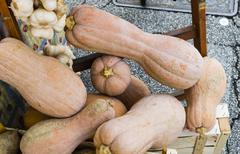pumpkins and garlic - stock photo