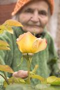 Stock Photo of senior woman with garden roses.