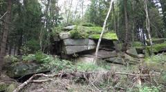 4k Tilt up from big mossy rocks landscape in low mountain range Harz Stock Footage
