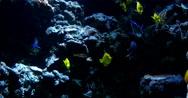 Stock Video Footage of 4K Tropical Fish 01 Underwater