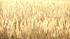 beautiful autumn field at sunset 4k - stock footage