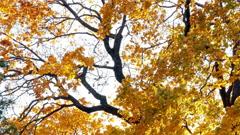 beautiful autumn tree at sunset 4k - stock footage
