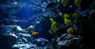 Stock Video Footage of 4K Tropical Fish 02 Underwater