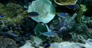 Stock Video Footage of 4K Tropical Fish 04 Underwater