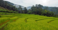 Terraced rice field in northern Thailand, Chiang Mai province Stock Footage