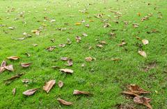 Fallen leaves on the grass meadow Stock Photos
