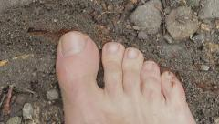 Mans foot stands on fire ants. Stock Footage