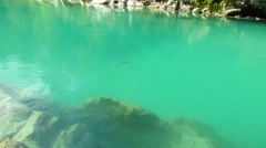 Fish swimming in emerald color flowing river Stock Footage