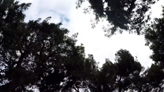 VIEW OF PASSING TREETOPS AS SEEN THROUGH THE SUNROOF OF A CAR Stock Footage