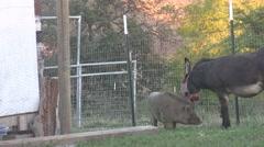 Animal BFF Stock Footage