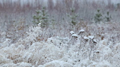 Frosty morning in the wild forest. Stock Footage