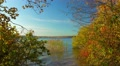 Autumn nature,  landscape with birches on shore of forest lake. Footage