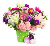 pot  of aster flowers - stock photo