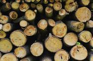 Stock Photo of firewood wood pile