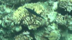 Fish Red Sea 03 Dahab Stock Footage