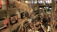 Visitors Inside Museum Stock Footage