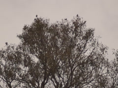 Nature, goldfinches on the tree Stock Footage