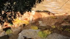 Quiet creek Stock Footage